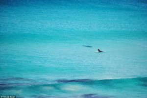 surfistas-perseguido-por-tiburon-04
